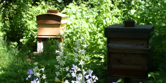 Beehives and bluebells