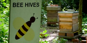 The Beehives, Martineau Gardens