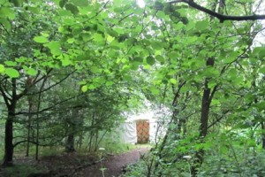 The Yurt, glimpsed through woodland