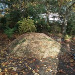 Bark chippings, shd, nov