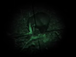 Badger filmed in night time vision, visiting Martineau Gardens